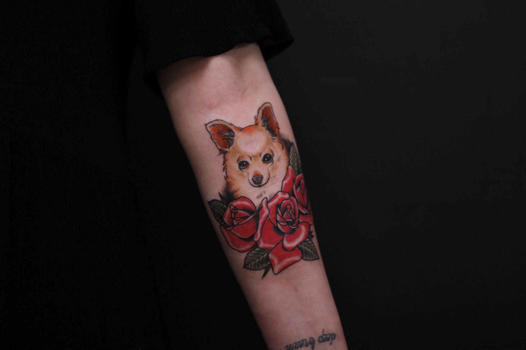 neo traditional pet portrait chihuahua dog animal tattoo with roses colour  - Neo Traditional Tattoo Dog